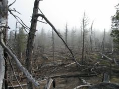 Forest Fire - Aftermath
