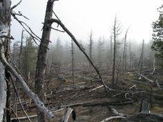 Forest Fire - Aftermath Forest Quotes, Lone Wanderer, Fire Image, Velasco, Desert Life, Madara Uchiha, Destruction, Storyboard, Dark Art