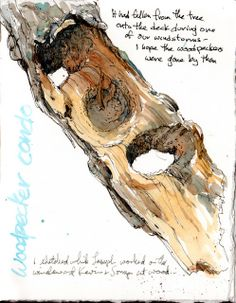 Sketching in Nature: Woodpecker Condo. By Cathy Johnson.
