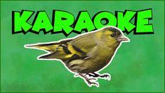 Čížiček, čížiček (karaoke) Karaoke, Youtube, Literatura, Youtubers, Youtube Movies