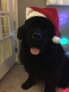 Merry Christmas from Wyatt!