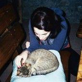 Pavlova torta s mascarpone krémom - recept Pavlova, Cats, Mascarpone, Gatos, Cat, Kitty, Kitty Cats