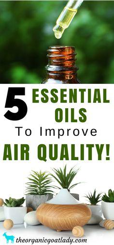 5 Essential Oils To Improve Air Quality, Air Purifier, Essential Oils To Purify Air, Cleaning with essential oils, essential oils diffuser blends, aromatherapy recipes