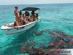 Nurse Shark feeding at Shark Ray Alley, Hol Chan Marine Reserve; Royal Caribbean Ships, Caribbean Sea, Vacation Destinations, Vacation Spots, Independence Of The Seas, Weather In Belize, Belize Barrier Reef, Nurse Shark, Marine Reserves