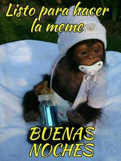 Memes, Humor, Sayings, Salvador, Spanish, Images For Good Night, Be Nice, Poster, Savior