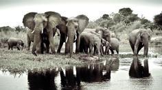 Safaris et lagons de Tanzanie