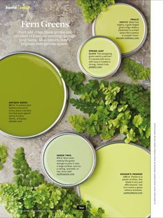 Better Homes And Gardens Fern Greens Green Color PalettesGreen ColorsPaint