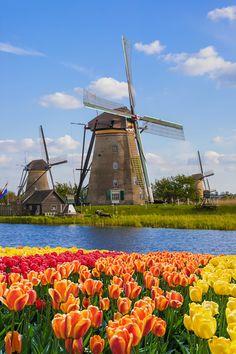 See Kinderdijk s historic windmills with Viking Cruises on 5 tulip-filled river cruises next spring River Cruises In Europe, Cruise Europe, Van Gogh Museum, Windmill Drawing, Beautiful World, Beautiful Places, Cruise Destinations, Viking River, Diy Crafts