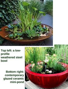 Stunning Water Features You Can Make In A Day – Container Water Gardens Indoor Water Features, Small Water Features, Water Features In The Garden, Patio Pond, Ponds Backyard, Backyard Landscaping, Garden Ponds, Garden Oasis, Small Water Gardens