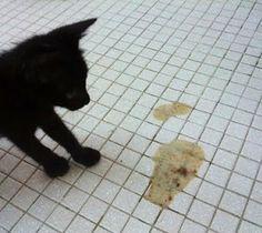 Kucing Muntah: Kucing Muntah dan Mencret