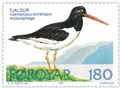 Et færøsk frimærke med billede af en strandskade