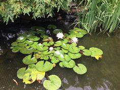 Zen Pond-East Quogue