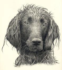 Ik heb een hond van hetzelfde ras, echt een schatje! Daarom wil ik hem graag ook op papier hebben zodat ik hem overal kan zien.