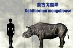 Gobitherium mongoliense by sinammonite on DeviantArt