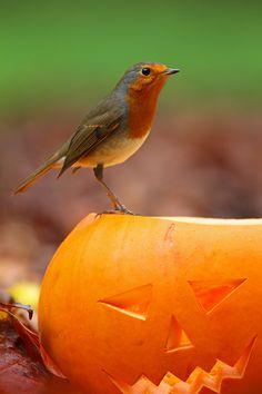 Spooky Robin!