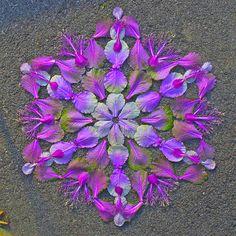 Flower Mandalas – Floral creations by Kathy Klein Mandala Art, Art Floral, Land Art, Flower Petals, Flower Art, Mantra, Elefante Hindu, Art Et Nature, Environmental Art
