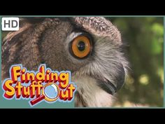 """Finding Stuff Out – """"Tools"""" Season 1, Episode 11 - YouTube"""