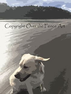 Yellow Labrador Card Windy Ears Dog Photography by overthefenceart
