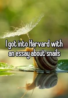 """Someone from Cincinnati, Ohio, US posted a whisper, which reads """"I got into Harvard with an essay about snails"""" Tumblr Funny, Funny Memes, Hilarious, Jokes, My Hero Essay, Weird Facts, Fun Facts, Whisper App, Whisper Funny"""