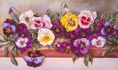 sweet pansies