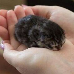 newborn kitten Tap the link for an awesome selection cat and kitten products for your feline companion!