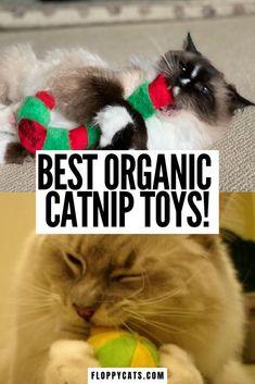 The Best Organic Catnip Toys | Catnip Toys | Organic Cat Toys | Cat Toys to Buy | Best Cat Toys Products | Catnip Filled Toys #bestcattoys #organiccatniptoys #organiccattoys Homemade Cat Toys, Diy Cat Toys, Best Interactive Cat Toys, Cat Presents, Best Cat Litter, Cat Food Brands, Best Cat Food, Catnip Toys, Cat Collars