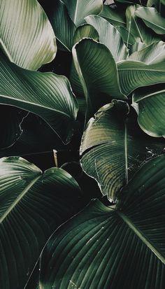 Plant Wallpaper, Screen Wallpaper, Nature Wallpaper, Leaves Wallpaper, Iphone Wallpaper Tropical, Painting Wallpaper, Phone Backgrounds, Wallpaper Backgrounds, Wall Papers Iphone