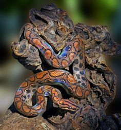 The Most Beautiful Snakes on Earth