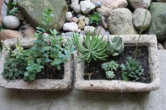 Pots we made in Hypertufa class | Flickr - Photo Sharing!