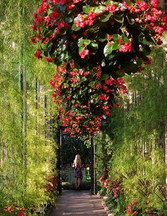 An Afternoon at Longwood Gardens near Philadelphia by UGArdener, via Flickr. Another inspiring garden.