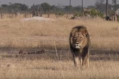 Dwindling prey threatens predators around the globe - UPI.com