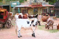 Visit San Antonio, Texas | Explore San Antonio things to Do, Enchanted Springs Ranch