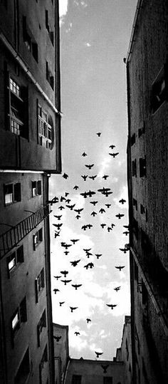 Like bombers above the city...