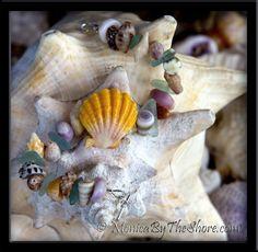"Custom Hawaiian Sunrise Shell ""Beach Candy"" Seashell Bracelet"