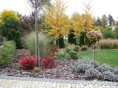 Marzenie o... - strona 136 - Forum ogrodnicze - Ogrodowisko