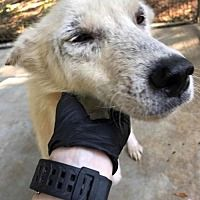 Available Pets At Rescue Dogs Rock Nyc Inc In New York New York Rescue Dogs Dog Rocks Dogs