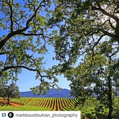 #Repost @markbouldoukian_photography with @repostapp.  Napa Valley made me feel like I'm in  Italy  @visitnapavalley --------------------------------------- #VisitNapaValley #WineCountry #Wanderlust #Winery #NapaValley #Vineyards #Travel #California #visitcalifornia #heaven #scenery #photooftheday #warrenjc #rawcalifornia #canon_photos #instagood #life #vacation #worldphotos #wildcalifornia #outdoors #sun #summer #bestshotz #Winetasting by idaysivas