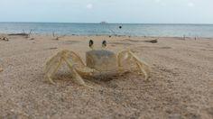 cangrejo-crab12