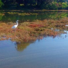 """As we drove passed a sign pointing to a wildlife rescue during our weekend gateaway I thought to myself: """"We should stop by and check it out next time we're in the area"""". Little did I know that 2 minutes later I'd find an injured egret (like the one pictured) on the side of the road! I called the rescue center and proceeded as instructed: I caught it and wrapped it with a blanket to bring to them. I held it on my lap as my husband drove; my heart filled with emotions. My life is blessed with…"""