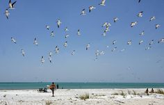 Top beaches near Tampa Bay? We pick our favorite bay and gulf beaches