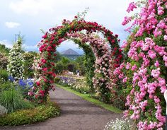 Beautiful Rose Garden Wallpaper - Beautiful Rose Garden Background With a wooden deck or as a family garden: we present two design ideas for seatin. Most Beautiful Gardens, Beautiful Flowers Garden, Beautiful Roses, Arch Flowers, Floral Flowers, Rambler Rose, Garden Wallpaper, Rose Wallpaper, Parks