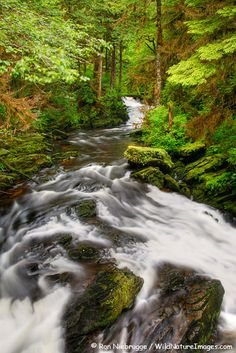 Stream and Trail in the Tongass National Forest which is all around Ketchikan and was also all around Juneau