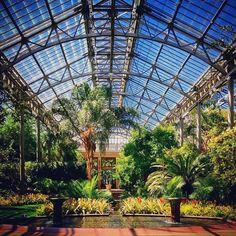 Longwood gardens. Visiting places like this make me think I would have really enjoyed being a 19th century millionaire. #longwoodgardens #kennettsquare #greenhouse #plantgoals #plantlove #dupont #palms #plants #botanical #botany #Botanistsofinstagram #tropicalplants