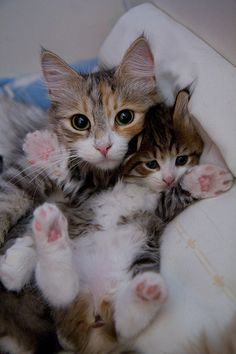 Mom And Her Kitten
