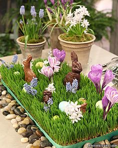 Easter Wheat Grass Centerpiece...with chocolate rabbits.  Would be a cute centerpiece for Easter!!  Instructions included.