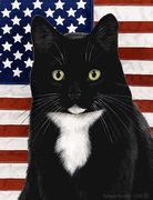 Black And White Tuxedo Cat Black And White Tuxedo, White Cats, Black Cats, Cat Clipart, Kinds Of Cats, Domestic Cat, Buy A Cat, Cat Breeds, Cats And Kittens