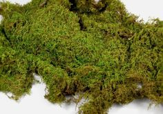 Sheet Moss (Hypnum) that iseasy to cultivate and stands up to foot traffic, a good choice to use on around and between stepping stones. It forms a low dense mat, making it a favored lawn alternative; $29.99 for five pounds (covers 5 square feet) at TN Native Tree & Plant Nursery.