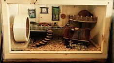 We are building a hamster cage :) Diy Hamster House, Cool Hamster Cages, Hamster Life, Hamster Habitat, Hamster Toys, Hamster Stuff, Dwarf Hamster Cages, Robo Dwarf Hamsters, Funny Hamsters