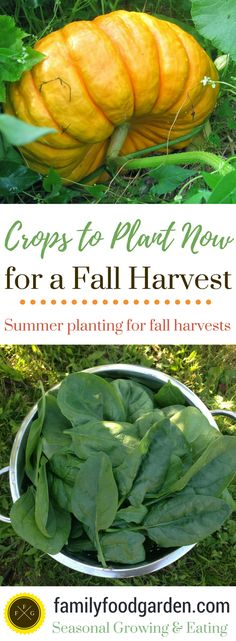 Crops to plant now for a fall harvest