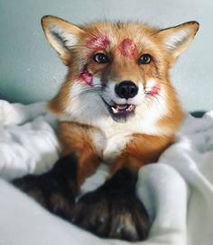 Лисичек вам картинки, Животные, лиса, длиннопост